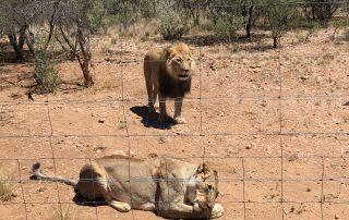 shuttles in namibia