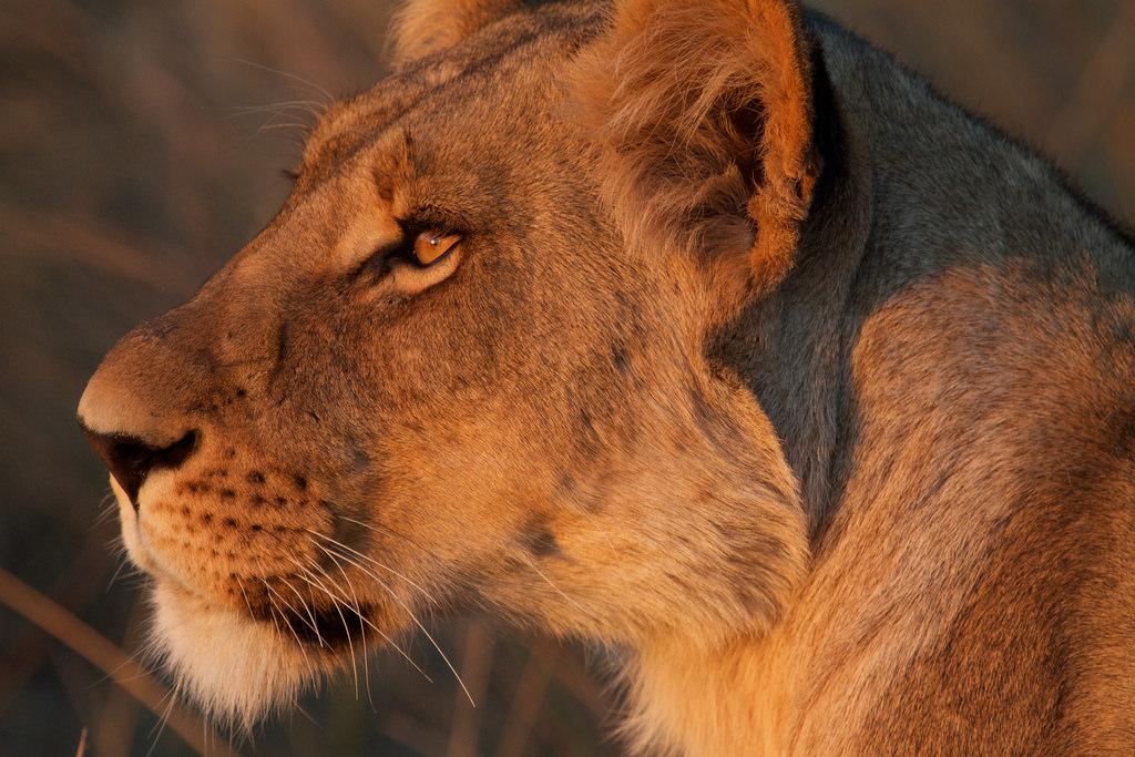 botswana Quest tours & safaris